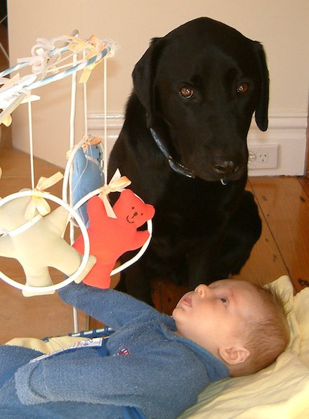 Harry dog watching over baby